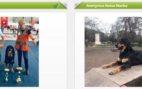 Anonymus Notus